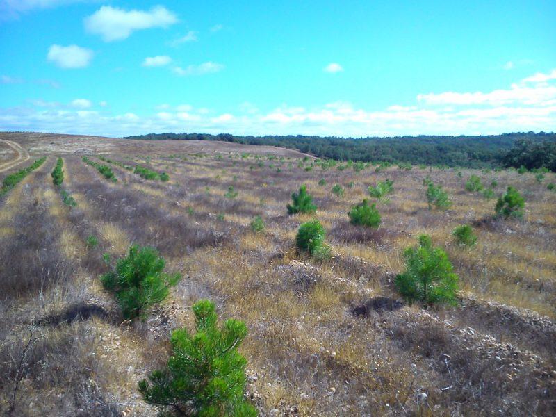 Ayudas a la forestación 2017
