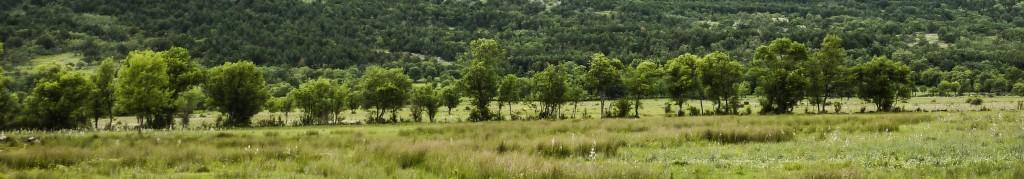 Monte El Rebollo