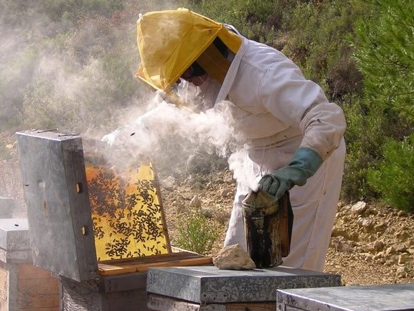 Ayudas para la apicultura
