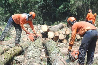 Firmado el Primer Acuerdo Marco para el sector de las actividades forestales