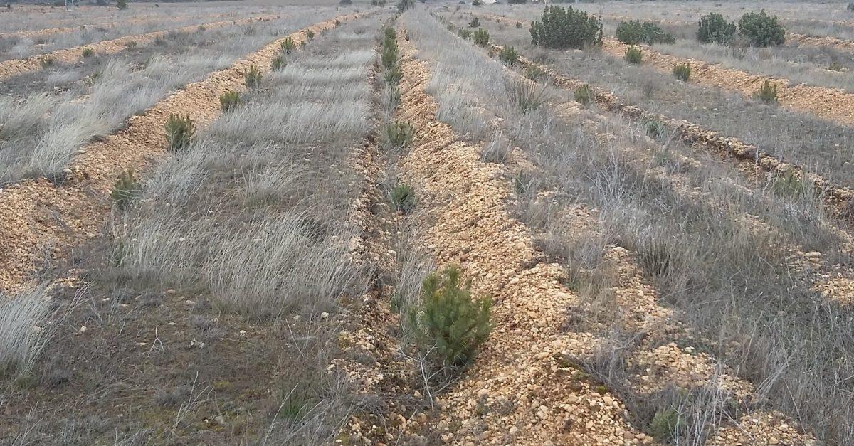 Plantación en Santervás, Soria