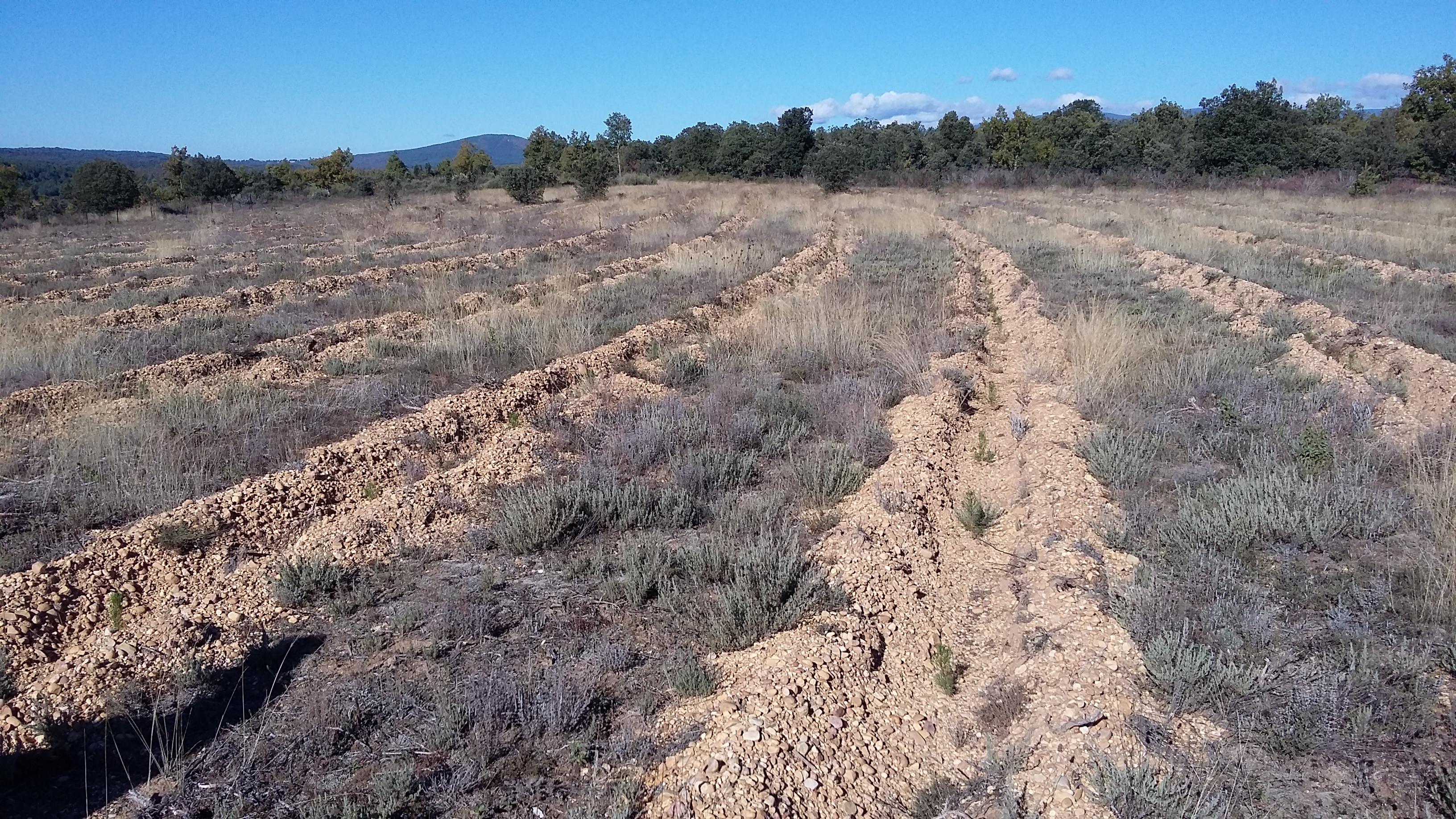 Finalización del plazo para justificar la ayuda a la forestación de la convocatoria de 2017