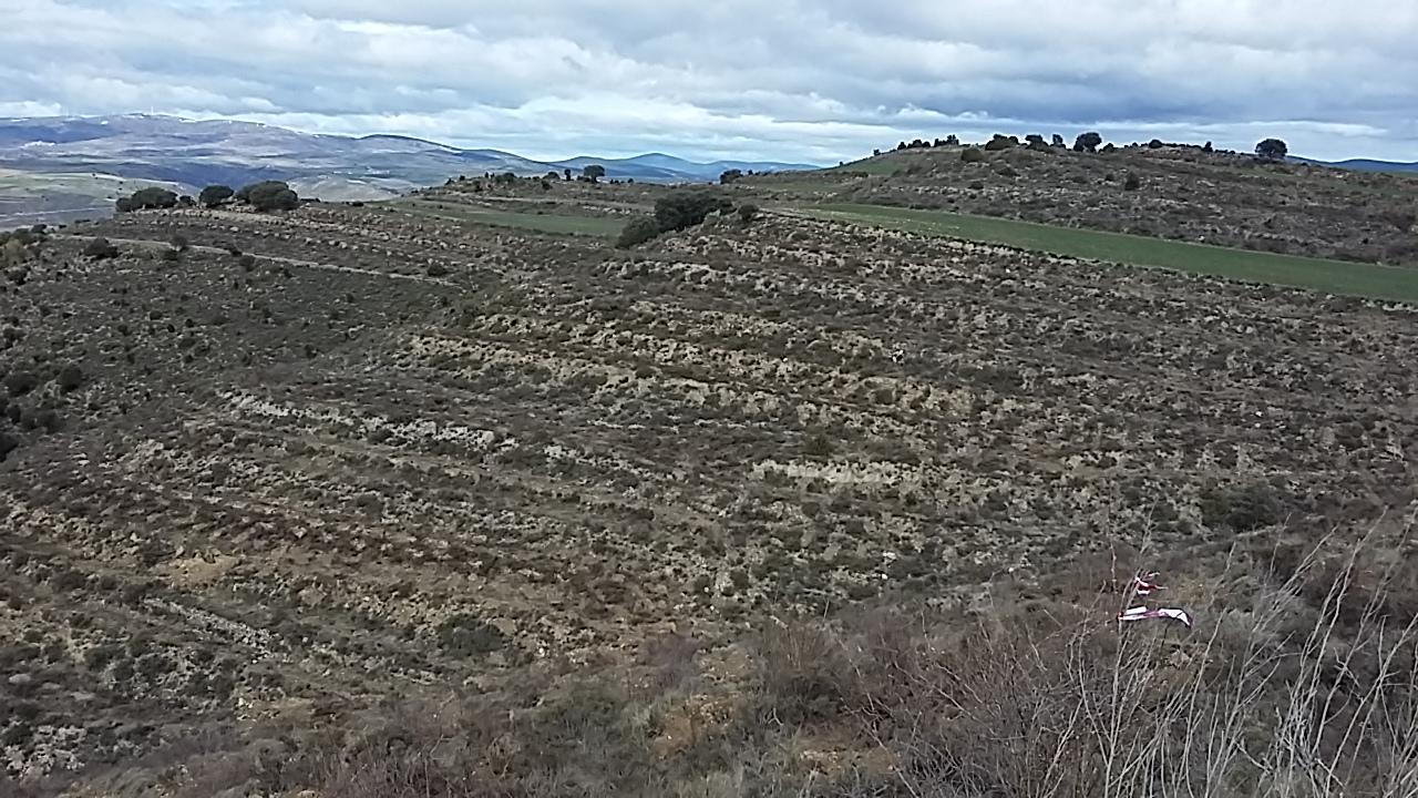 23.000 árboles plantados en Valdelagua del Cerro
