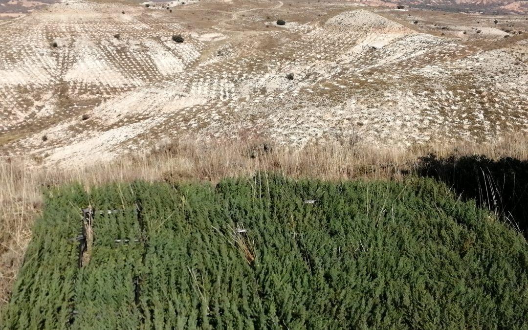 45.000 árboles plantados en Alcozar
