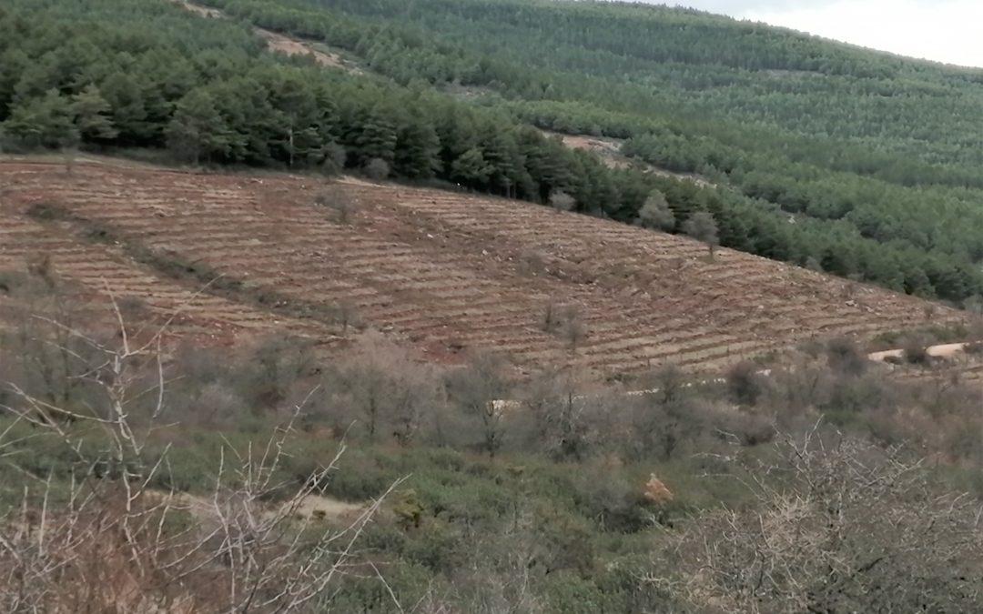 15.000 árboles plantados en Trévago